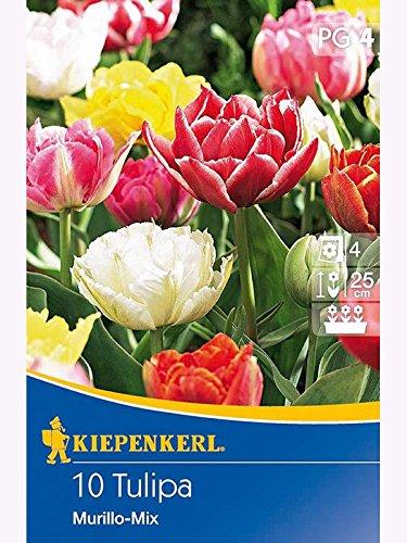 Gefüllte Frühe Tulpen Mix