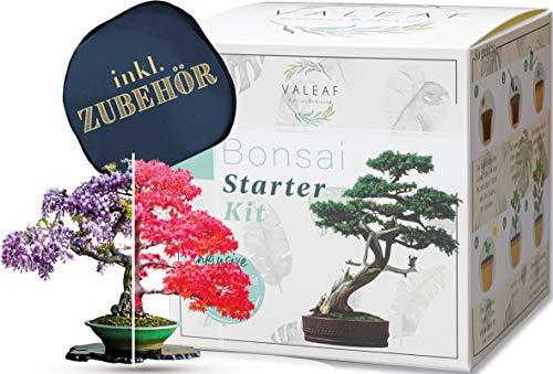valeaf Bonsai Starter Kit - SUMMER SALE - Züchten Sie Ihren eigenen Bonsai Baum - Anzuchtset inkl....