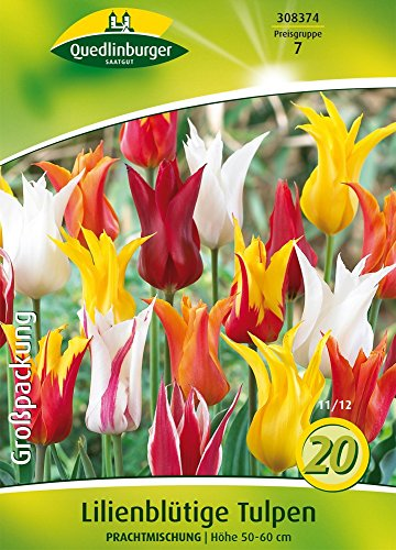 Quedlinburger 308374 Lilienblütige Tulpe Prachtmischung (20 Stück) (Tulpenzwiebeln)