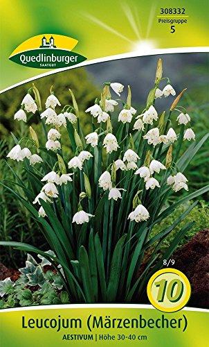 Quedlinburger 308332 Leucojum Aestivum (Märzenbecher) (10 Stück) (Sommerknotenblumenzwiebeln)