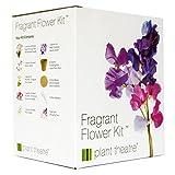 Plant Theatre Kit Fragrant Flowers - 6 wunderbare duftende Sorten zum Anbauen - ein großartiges...