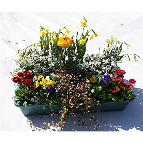 Frühlingspaket Kunterbunt - 15 Pflanzen bunter Farbmix in Gärtnerqualität von Blumen Eber - Kiste...