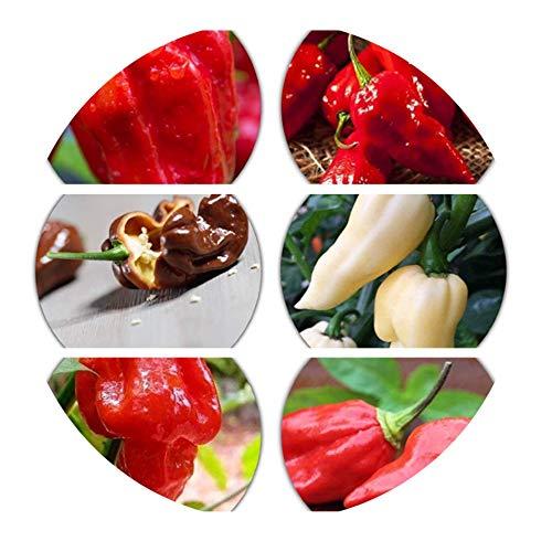 6er Set Chili Sorten - 6.5 Mio Scoville - nicht´s für Schwache!