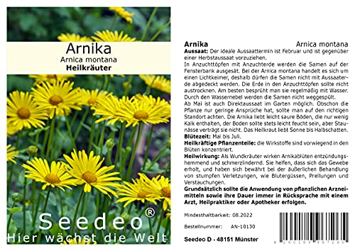 Seedeo® Arnika (Arnica montana) ca. 100 Samen