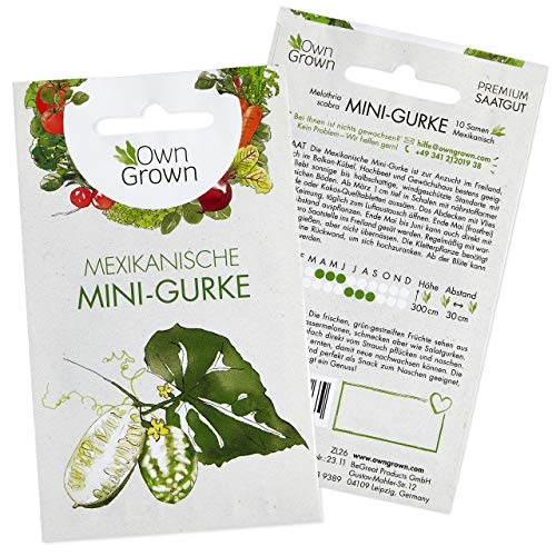 Mini Gurken Samen (Melothria scabra): Premium Mini Salatgurke Samen zur Aussaat, Sorte Mexikanische...