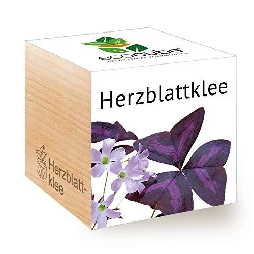 Feel Green Ecocube Herzblattklee/Love Plant, Nachhaltige Geschenkidee (100% Eco Friendly), Grow Your...