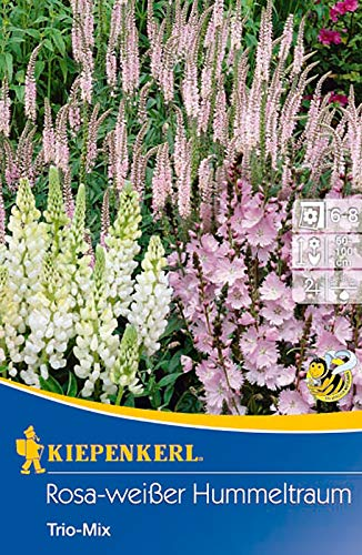 Kiepenkerl 736115 Rosa-weißer Hummeltraum (3 Stück) (Blumenzwiebeln)