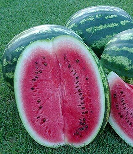 Melone - Wassermelone Crimson Sweet - 10 Samen