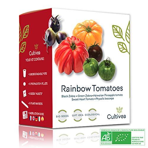 Cultivea Rainbow Tomatoes – Bio Tomaten Anzuchtset -100% Öko Samen – Indoor Garten – Das...