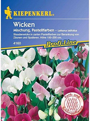 Kiepenkerl Lathyrus latifolius Mischung