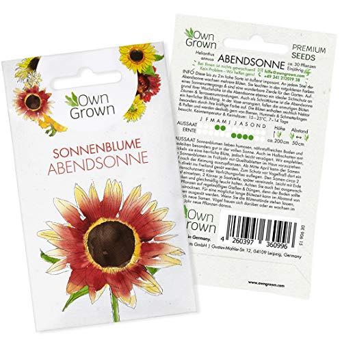Sonnenblumen Samen Abendsonne (Helianthus annuus): Premium Sonnenblumen Saatgut für hohe...