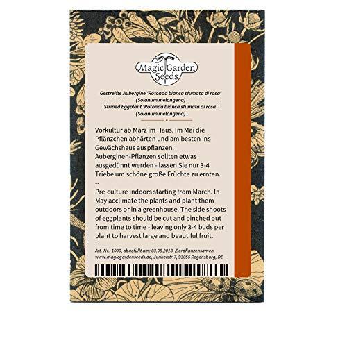 Magic Garden Seeds Gestreifte Aubergine 'Rotonda BIANCA sfumata di Rosa' (Solanum melongena) 50...