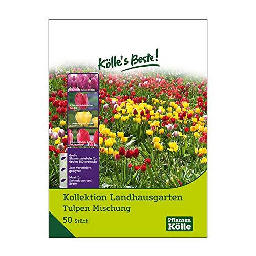 Kölle's Beste! Tulpen-Kollektion Landhausgarten, 50 Stück