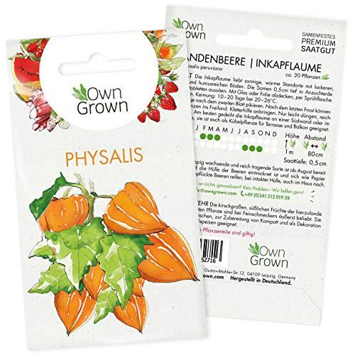 Physalis Samen: Premium Andenbeere Samen für ca. 30x Andenbeere Pflanzen – Kapstachelbeere...