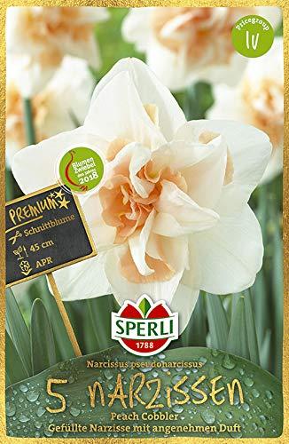 Sperli 457322 Narzisse Peach Cobbler (5 Stück) (Herbstblumenzwiebeln)