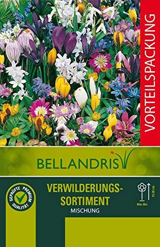mgc24® Blumenzwiebelmischung zur Verwilderung - 100 Blumenzwiebeln