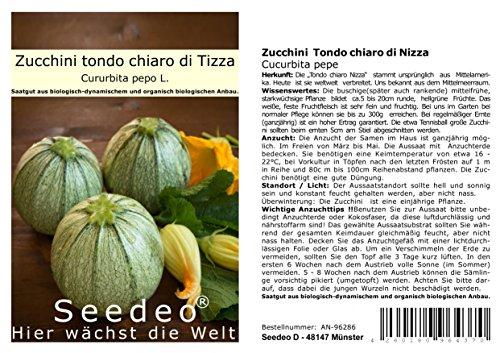 Seedeo Zucchini Tondo chiaro di Nizza (Cucurbita pepo) 15 Samen BIO