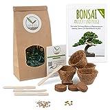 Bonsai Starter Kit Anzuchtset inkl. GRATIS eBook - Pflanzset aus Kokostöpfen, Samen & Erde -...