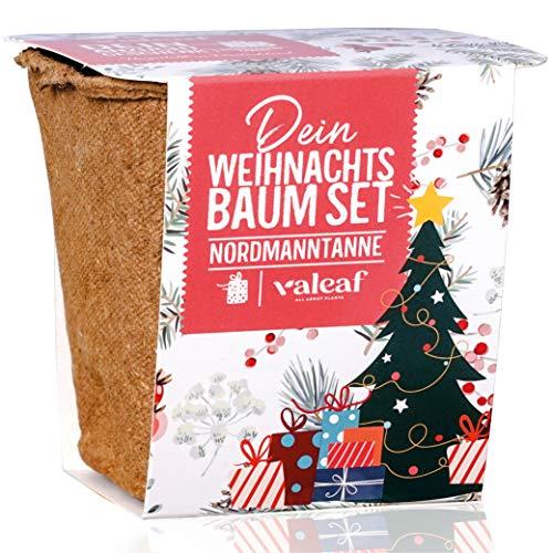 Weihnachtsbaum Anzucht Set I tolle Geschenk-Idee für Weihnachtsgeschenke, Wichtelgeschenke...
