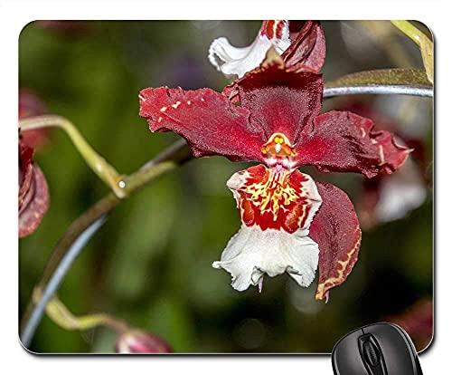 Mauspad Natur Samen Baum Obst Silvestre Gartenblume Mausunterlage Anti Rutsch Gummiunterseite...