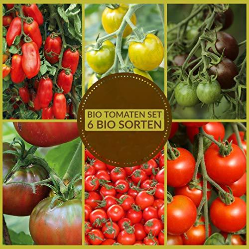 Samenliebe Tomaten Samen Set 6 Sorten BIO Tomatensamen für Deinen Garten & Balkon - rote, schwarze,...