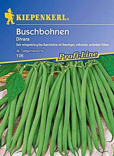 Bohne Divara / Buschbohnen