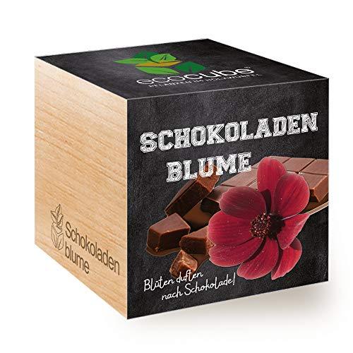 Feel Green Ecocube Schokoladenblume, Blüten Duften Nach Schokolade, Nachhaltige Geschenkidee (100%...