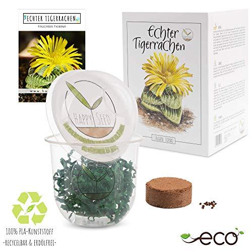 GROW2GO Kakteen Starter Kit Anzuchtset - Pflanzset aus Mini-Gewächshaus, Kaktus Samen & Erde -...