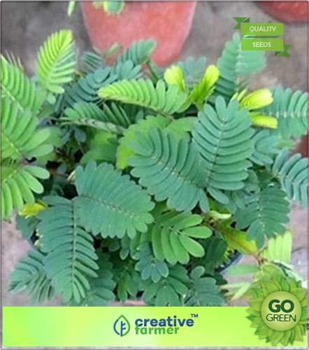 Pinkdose Aktion Pflanzensamen
