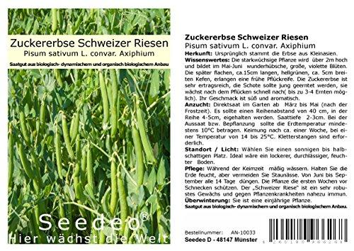 Seedeo® Zuckererbse Schweizer Riesen (Pisum sativum L. convar. Axiphium) ca. 50 Samen BIO
