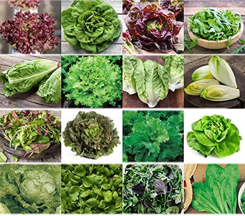 verschiedene Salate Saat 16 x 100 Saatgut Salat Mix 100% Natursamen handverlesen aus Portugal,...