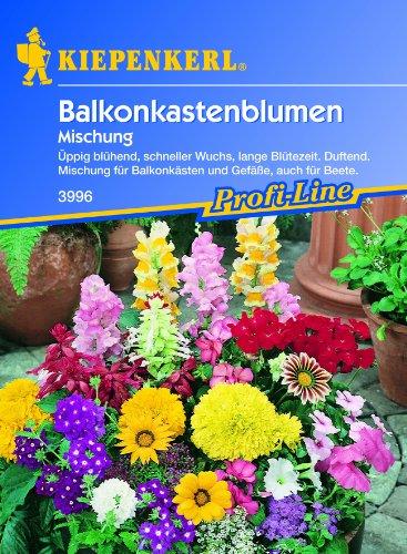 Balkonkasten-Blumen, Mix