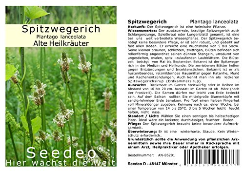 Seedeo® Spitzwegerich (Plantago lanceolata) 300 Samen