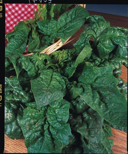 JustSeed - Gemüse - Spinat - Giant Winter - 300 Samen
