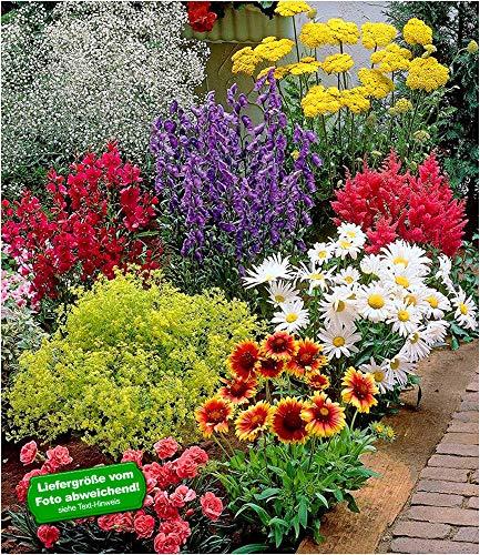 BALDUR-Garten Bunter Staudengarten, 9 Pflanzen, Staudenbeet, Stauden Sortiment, rote Astilbe,...