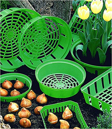 Dinies Deko & Gartenartikel Blumenzwiebel Pflanzschalen rund, 3er-Set