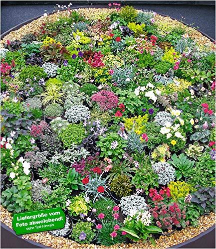 BALDUR-GartenSteingarten-Stauden-Mix 10 Pflanzen winterhart Grasnelke, niedrige Glockenblumen,...