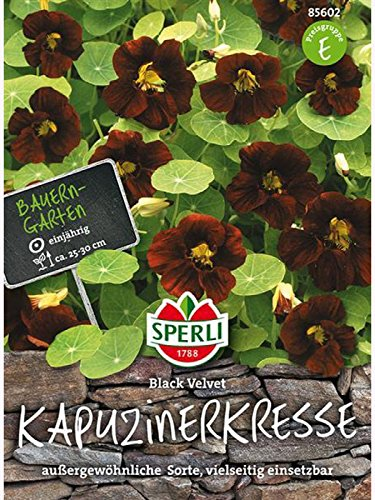 Sperli Blumensamen Kapuzinerkresse Black Velvet, grün