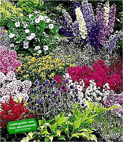 BALDUR Garten Buntes Staudenbeet 'Multi-Colour', 12 Pflanzen, Staudengarten, Stauden-Sortiment, 3X...