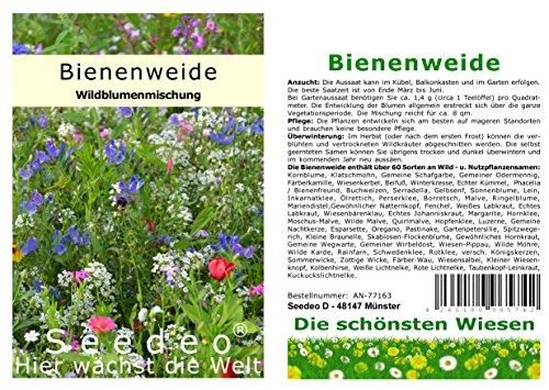 Seedeo® Bienenweide/Wild- und Nutzpflanzenwiese