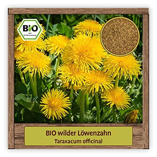 BIO wilder Löwenzahn Samen Kräutersamen (Taraxacum officinal) Wildblume mit essbare Blüten...