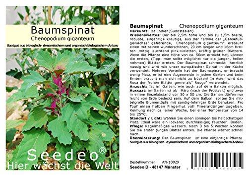 Seedeo® Baumspinat (Chenopodium giganteum) ca. 250 Samen BIO