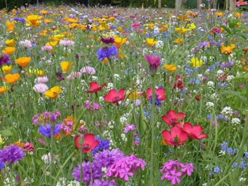 Blumenwiese mit 65 Wildkräuterarten, fünfjährige Bienenweide, insektenfreundliche Blühwiese,...