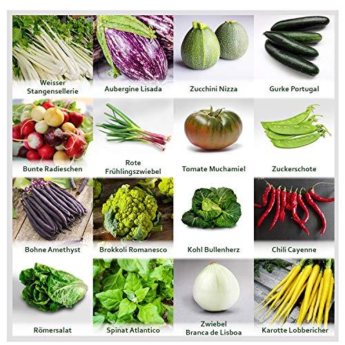 Gartengemüse Pflanzen Samen Set | Saatgut und Anzuchtset mit 16 Gemüse Sorten und 445...