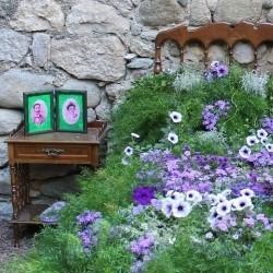 Zimmerpflanzen von Bakker