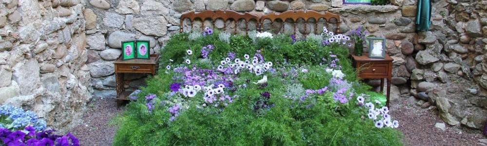 Geschenkideen mit Zimmerpflanzen von Baldur-Garten